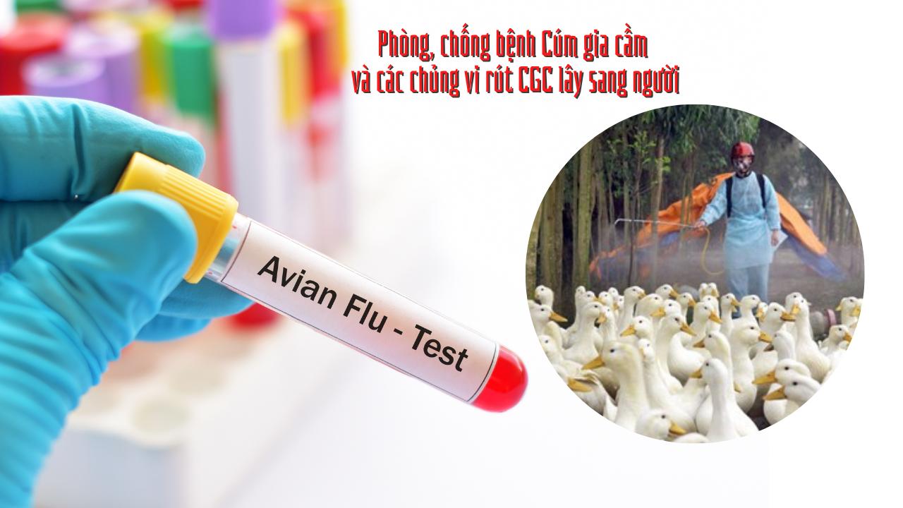 Triển khai quyết liệt, đồng bộ các giải pháp kiểm soát phòng, chống bệnh Cúm gia cầm